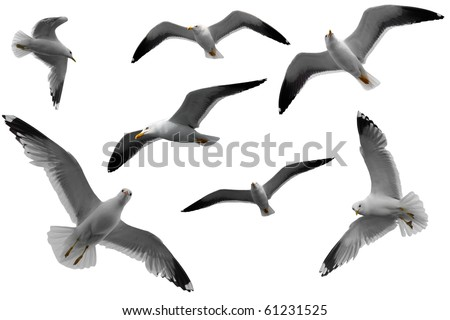 seagulls texture - stock photo