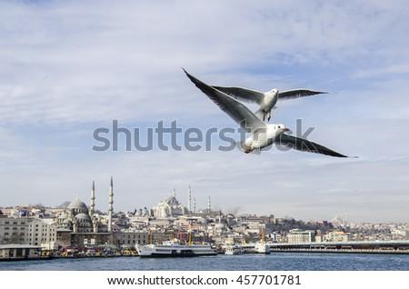 Seagulls under the Golden Horn in Istanbul, Turkey - stock photo