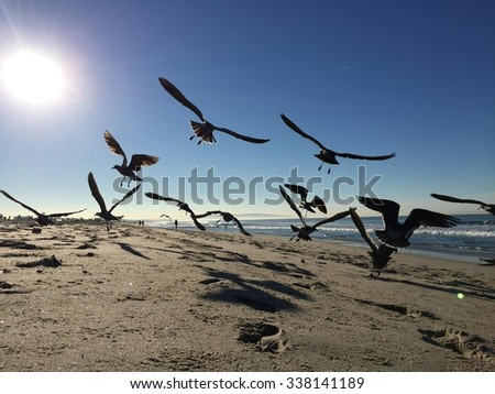 seaguls flying on the beach