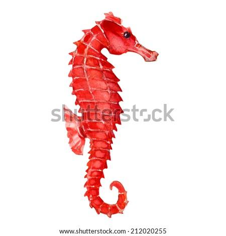 Seahorse - stock photo