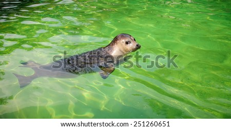 Seal - stock photo