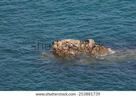 seal and pup on rocks