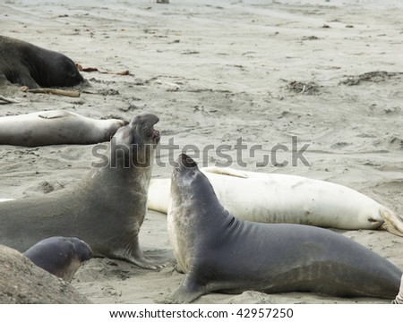 seal elephants