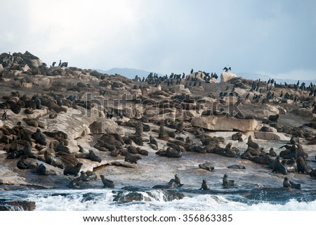 Seal Island, located in False Bay near SImon's Town, South Africa, is a favorite hunting ground for great white sharks.