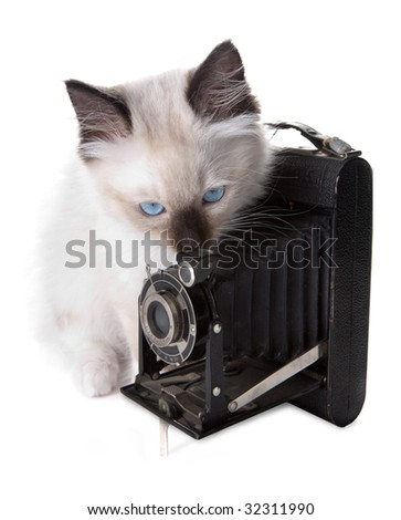 Seal point mitted ragdoll kitten with antique photo camera - stock photo