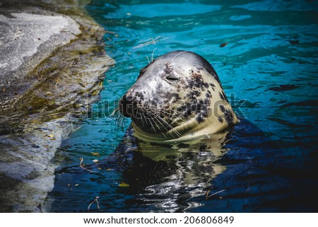 seal resting in the sun in the water - stock photo