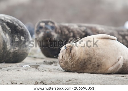 Seal sleeping on the beach