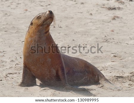 seal up - stock photo