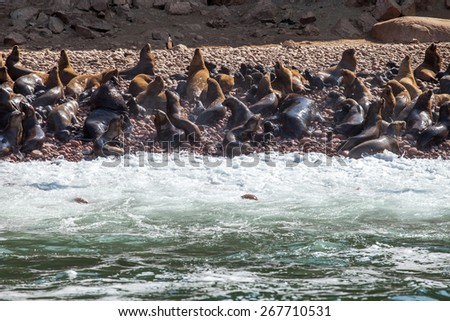Sealions on the seashore with waves and sea spume. Ballestas island, Peru - stock photo