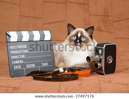 Sealpoint Ragdoll with vintage movie camera, movie clipboard and reel of film on suede background - stock photo