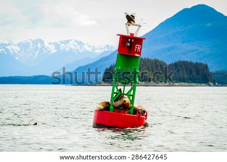 Seals and bald eagles on the Inside Passage near Juneau, Alaska. - stock photo