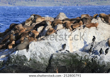 Seals and birds in Beagle Channel, Ushuaia, Argentina - stock photo