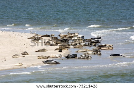 Seals on the beach - stock photo