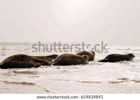 seals on the beach. Ready for the ocean.