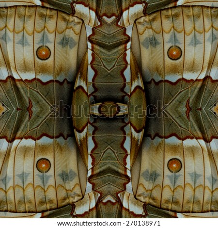 Seamless beautiful brown and red spots background made of Tufted Jungleking butterfly's wing texture - stock photo