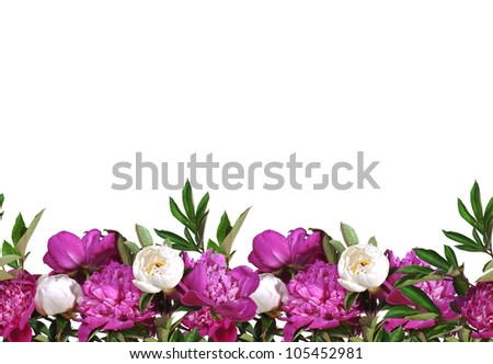 Seamless border of pink peonies isolated on white background. - stock photo