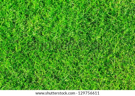 Seamless bright green grass background - stock photo