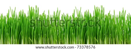 Seamless fresh spring green grass isolated on ? white background - stock photo