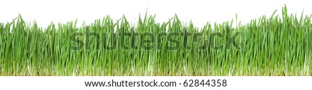 Seamless green grass isolated on a white. - stock photo