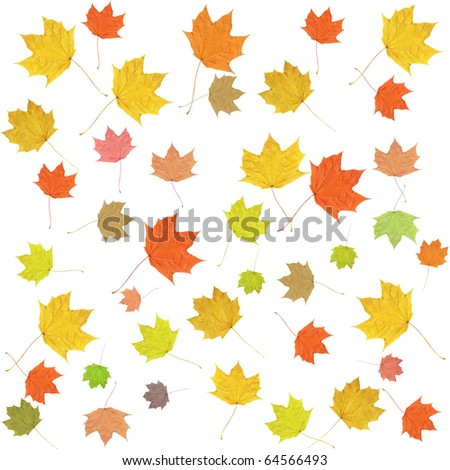 Seamless Leaves Background - stock photo