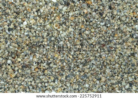 seamless natural shells background (can be tiled without seam) - stock photo