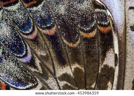 Seamless Pattern of Butterfly wing