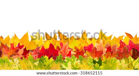 Seamless pattern of colour autumn maple leaves, isolated on white background. - stock photo