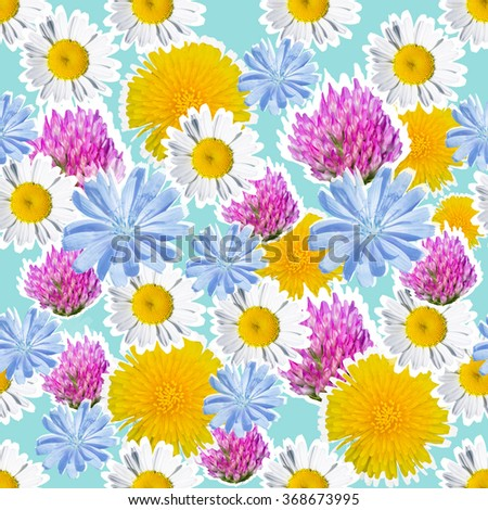 Seamless pattern of daisy, clover, dandelion and chicory - stock photo