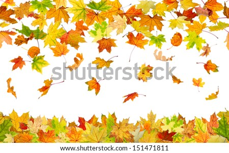 Seamless pattern of falling autumn leaves, on white background. - stock photo