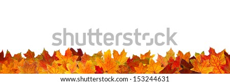 Seamless pattern of red maple autumn leaves, lying on the ground. - stock photo