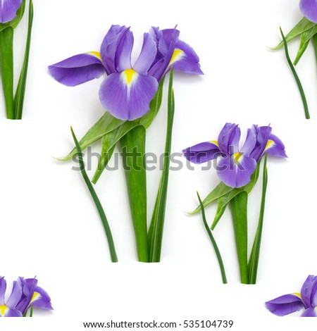 seamless  pattern purple iris on a green stem with leaves on a white background
