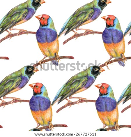 Seamless pattern with exotic birds. Pencil drawn gouldian finches on white background - stock photo