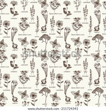 Seamless pattern with ink hand drawn medicinal herbs and flowers isolated on vintage background - stock photo