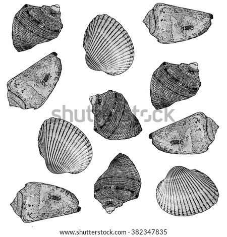 Seamless pattern with sea shells in black and white.