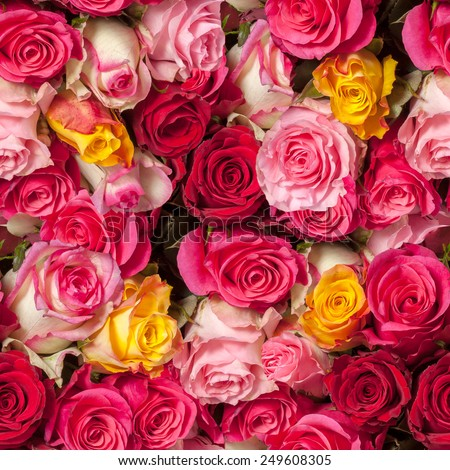 seamless roses background - stock photo