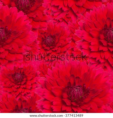 seamless texture blossomed lush red dahlia