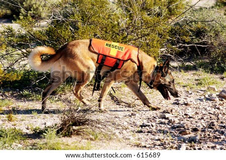 Search and rescue canine unit at work in the desert.