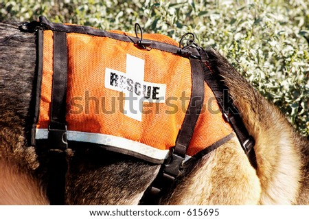 Search and rescue canine unit at work in the desert. - stock photo