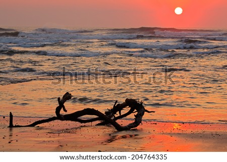 Seascape at sunrise with driftwood and warm colors from the early morning sun - stock photo