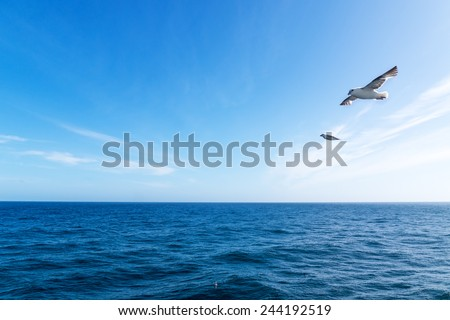 Seascape. Blue sky and white cloud. Calm sea. The Northern sea bird.