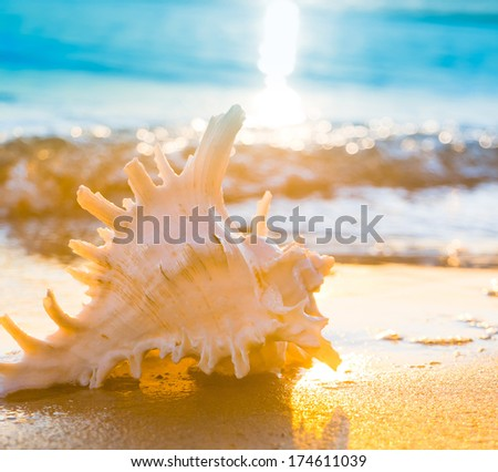 Seascape Divine Beach Pearl  - stock photo