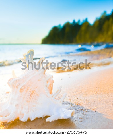 Seascape Divine Beautiful Shell  - stock photo