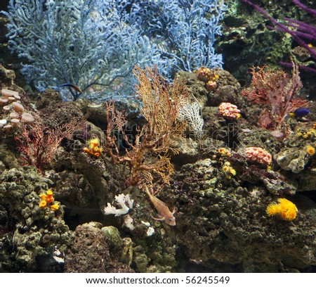 seascape of colorful coral and reef. - stock photo