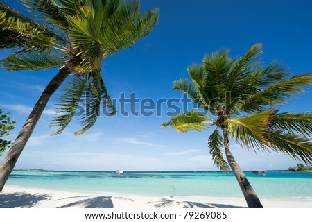 seascape of maldives island resort?palm tree at the beach.