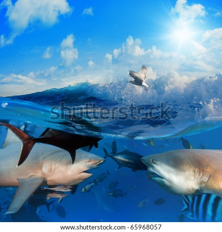 seascape split in  two parts First One with two bull-sharks in front of each other surrounded by small fish underwater Second one with sunlight cloudy sky splashed wave with seagull - stock photo