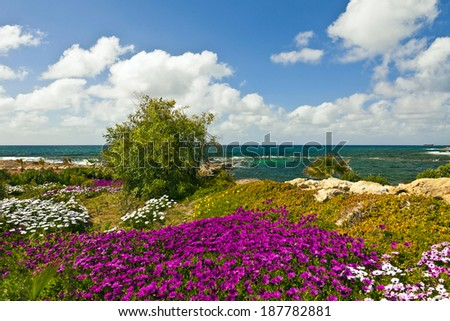 Seascape view with pink and white flowers at the foreground. - stock photo