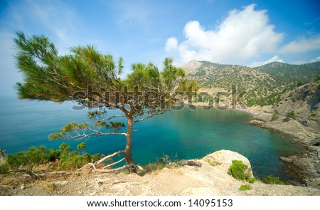 seascape with a pine tree - stock photo