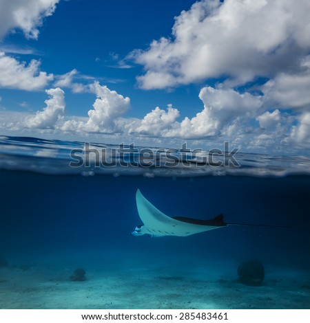 Seascape with beautiful clouds. Underwater part where mantaray floating over sandy bottom. - stock photo