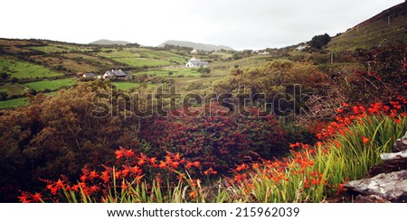 Seascape with orange crocosmia flowers in County Kerry - vintage effect. Green landscape with wildflower montbretia bloom along the Ring of Kerry retro photo. Ireland. Wide photo for web page slider. - stock photo