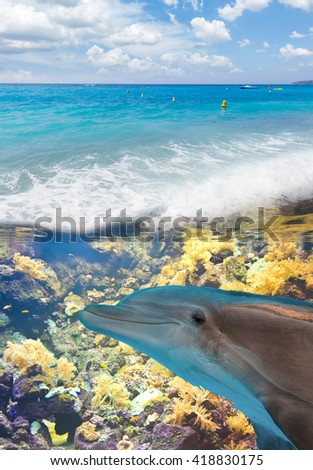 seascape with turquoise sea and  underwater dolphin and fishes - stock photo